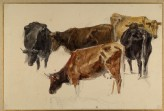 Study of a Group of Cows
