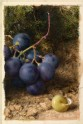 Grapes and a Yellow Snail-Shell