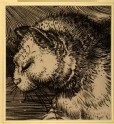 "Cat's Head: enlarged Drawing of Dürer's ""Adam and Eve"""