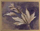 Study of Young Leaves of Plane, in Light and Shade