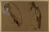 Two Studies of Vultures