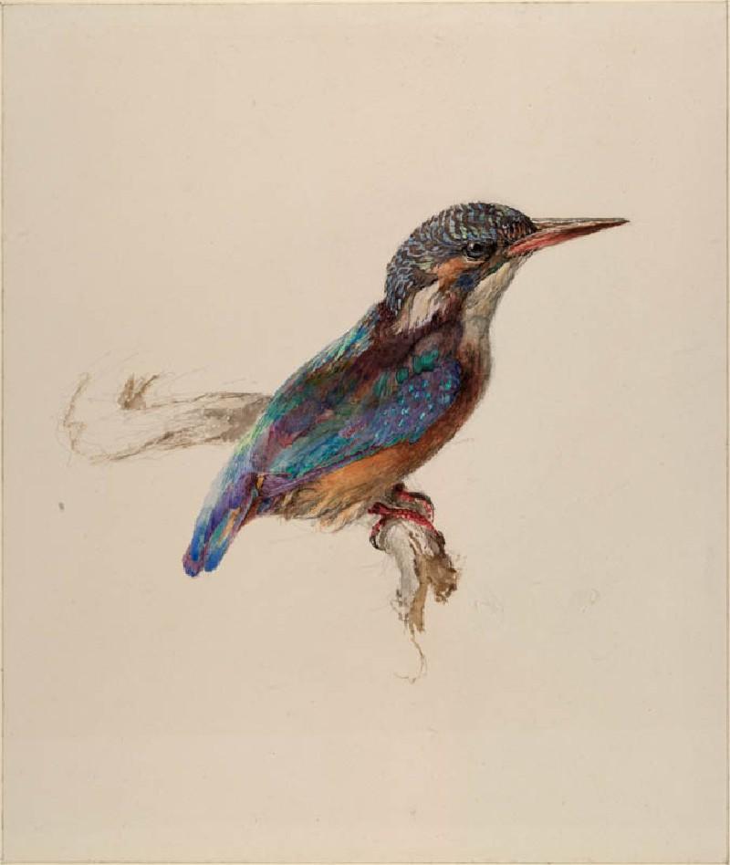 Ashmolean − The Elements of Drawing, John Ruskin's ...