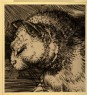 "Burgess, Arthur - Cat's Head: enlarged Drawing of Dürer's ""Adam and Eve"""